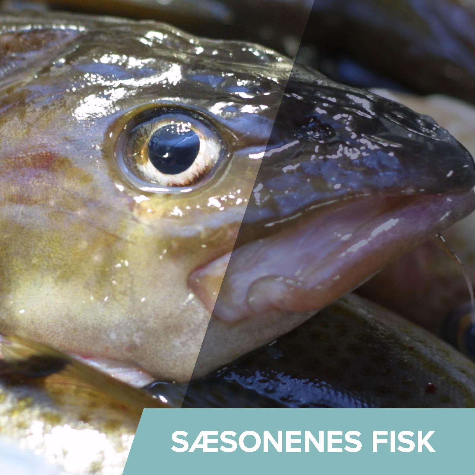 Generelt - Fisk i sæson