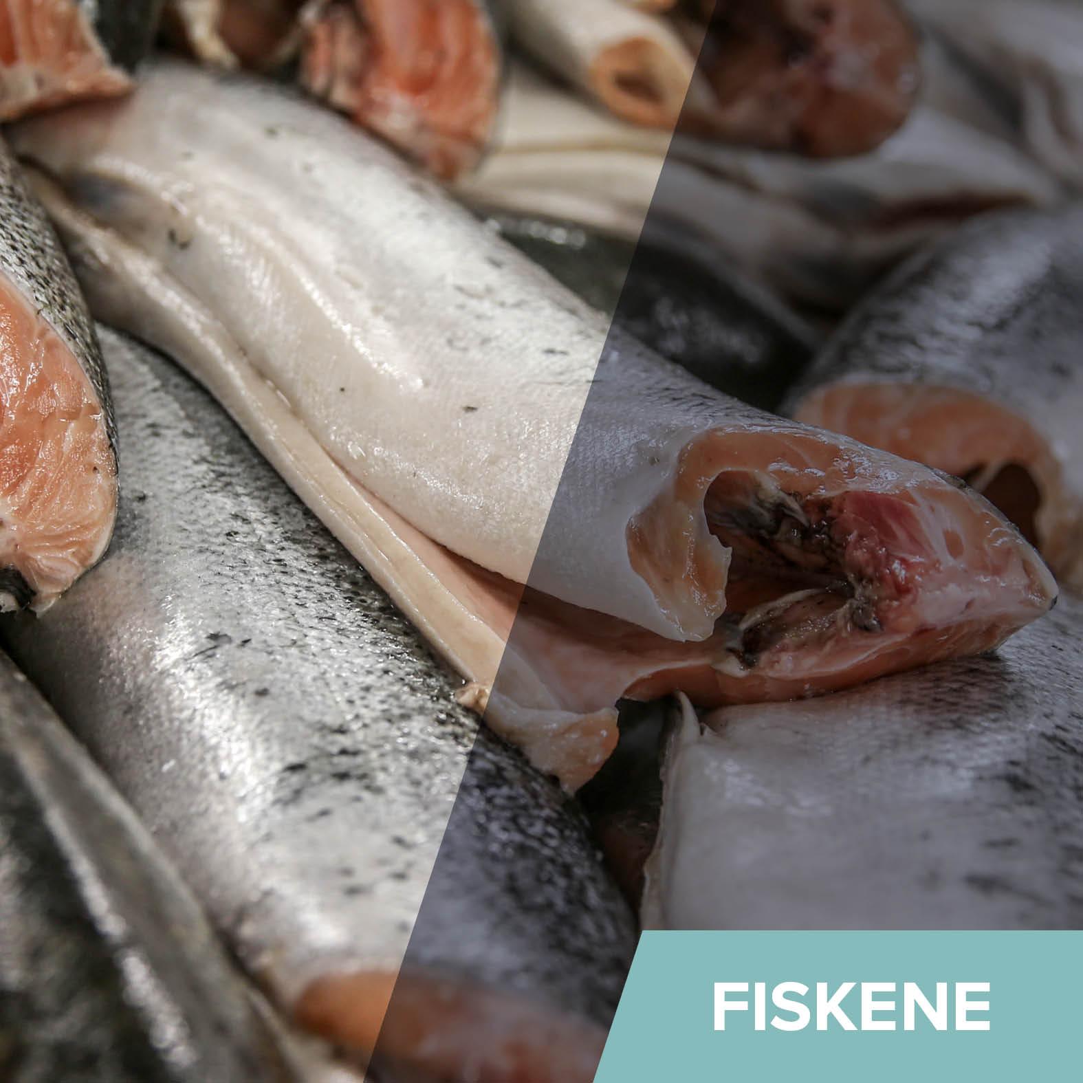 Generelt - Fiskene