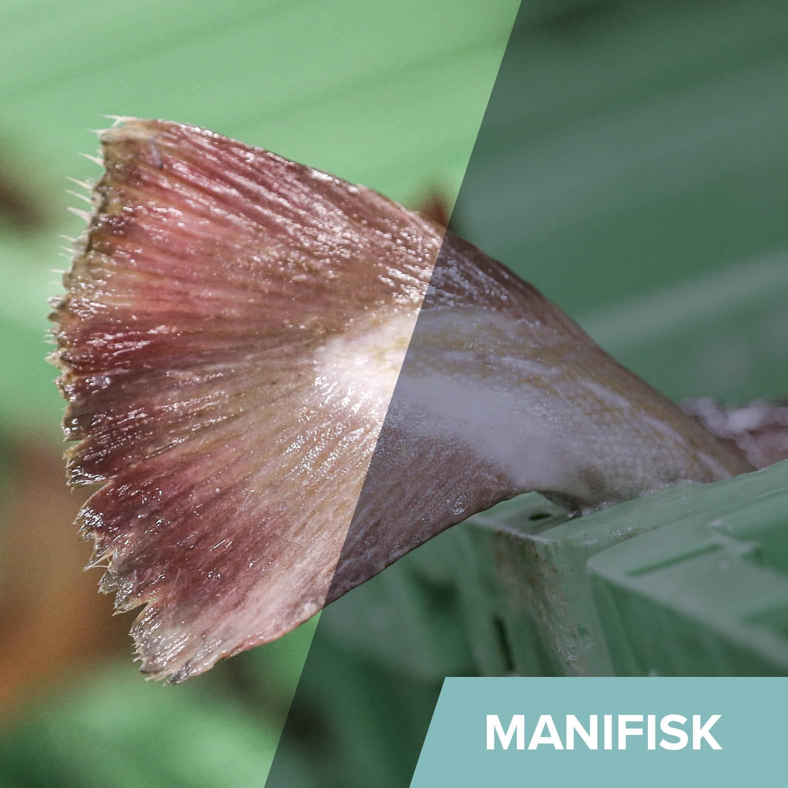 Generelt - ManiFisk